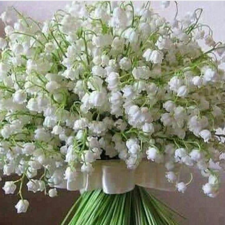 Muguet : la flor del 1º de mayo en Francia.